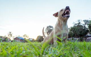 Dog Bites and Attacks