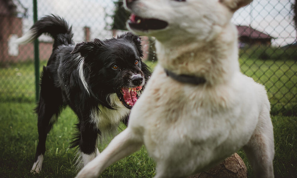 Dogs Attacking - Dog Bite Lawyer